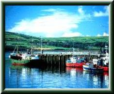 Dingle Harbour, click on photo